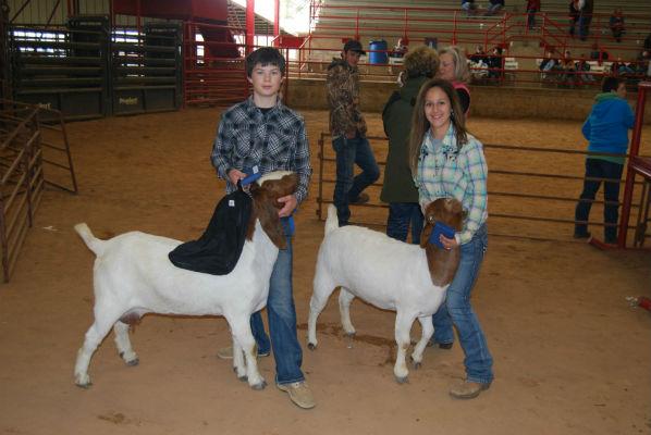 Breeding Goat winners