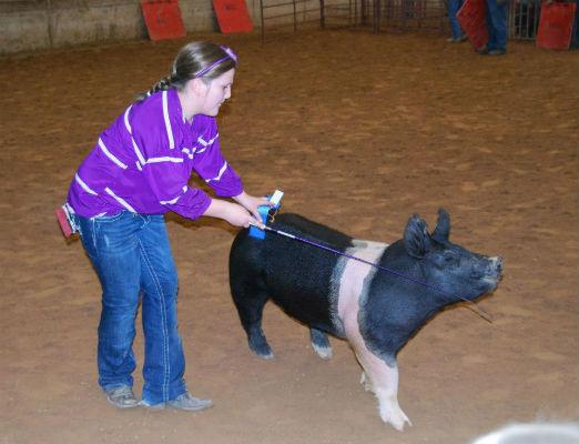 HCLS Results: Breeding Swine Show